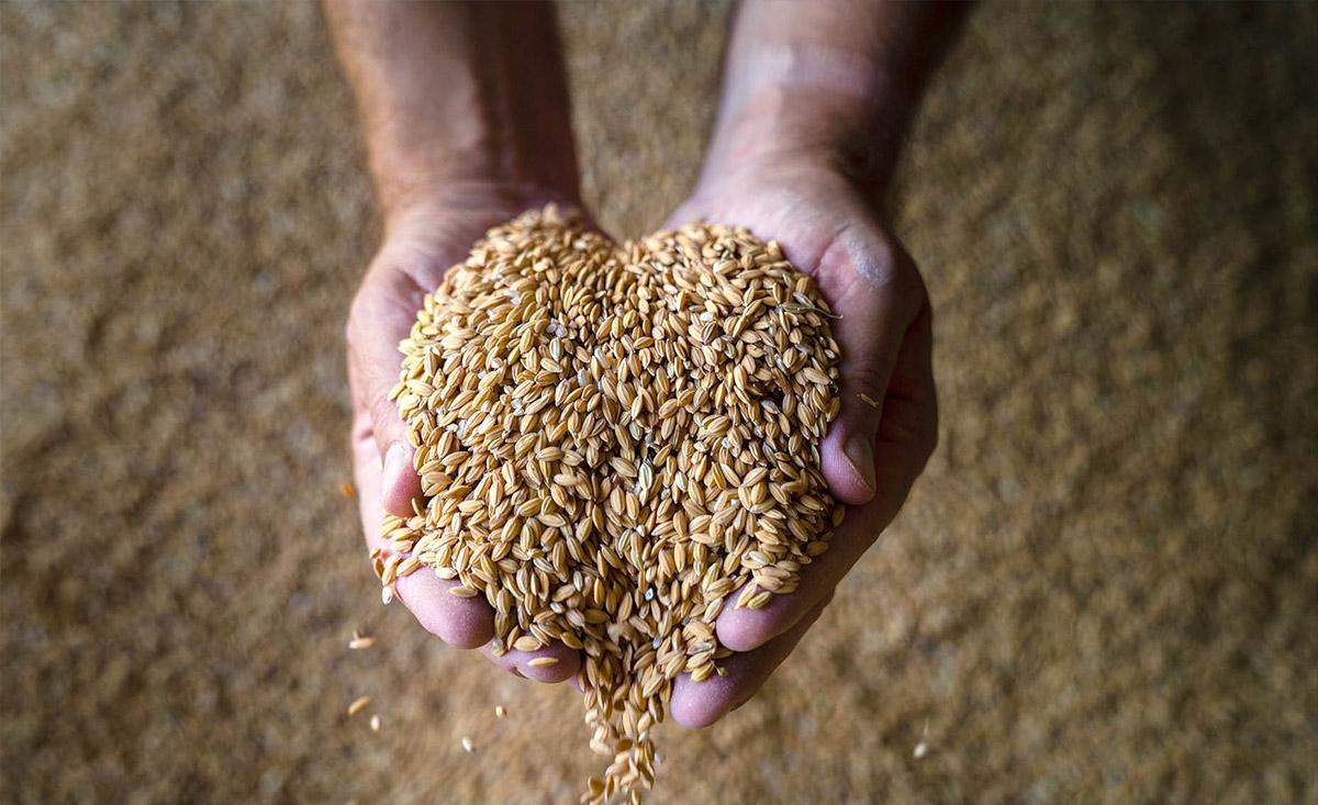 Arroz de calidad - arroz de Valareña